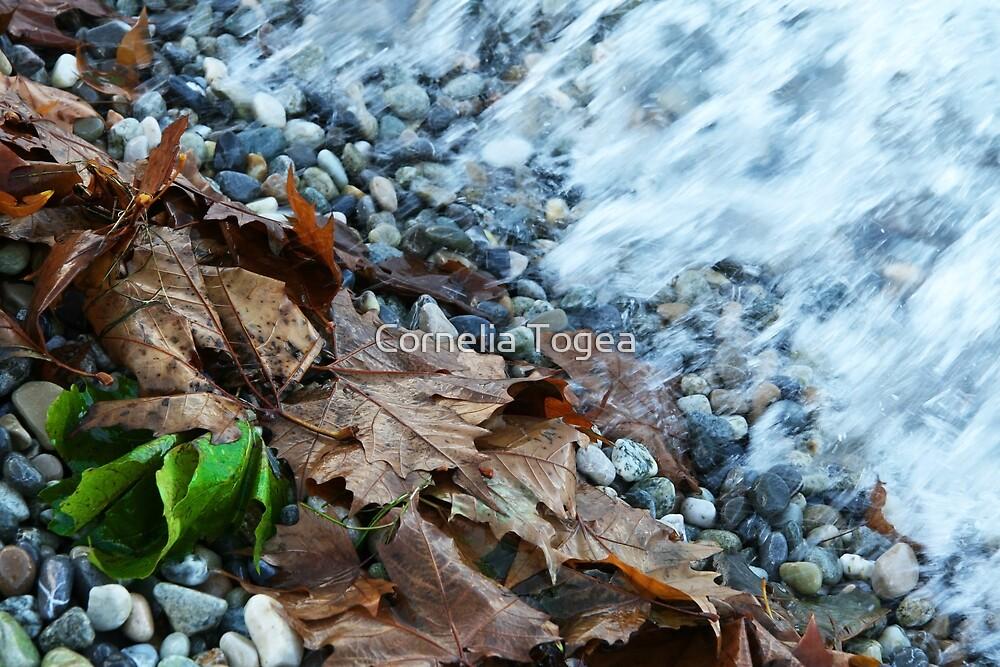 on the shore by Cornelia Togea