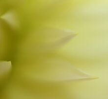 caress by italmacro