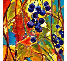 Grape Inspiration I Photographic Print