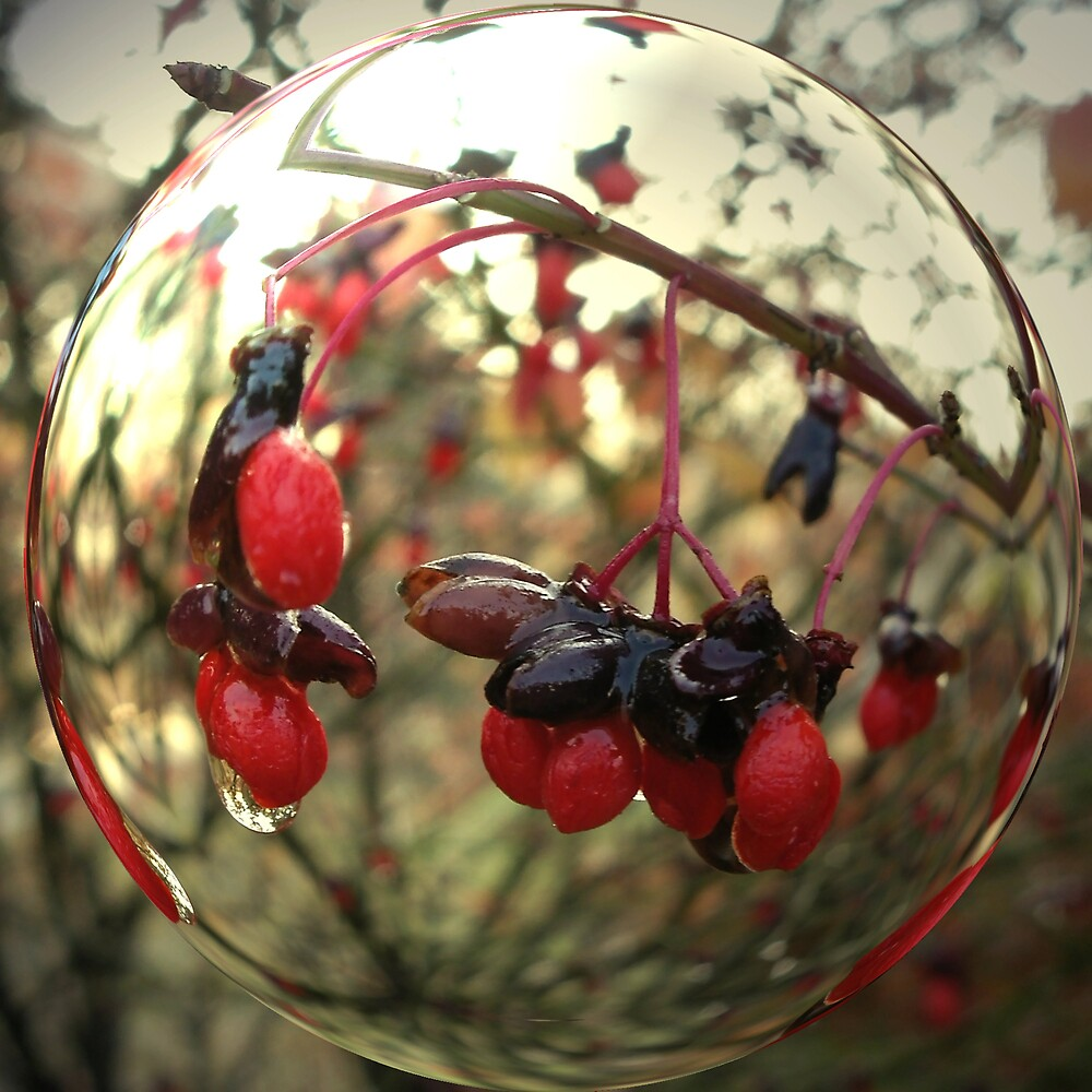 The Berry Globe by Bridget Banik