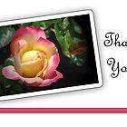 Rose Thank You by Sheryl Kasper