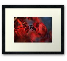 red leaves consumed in bokeh Framed Print