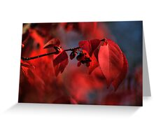 red leaves consumed in bokeh Greeting Card
