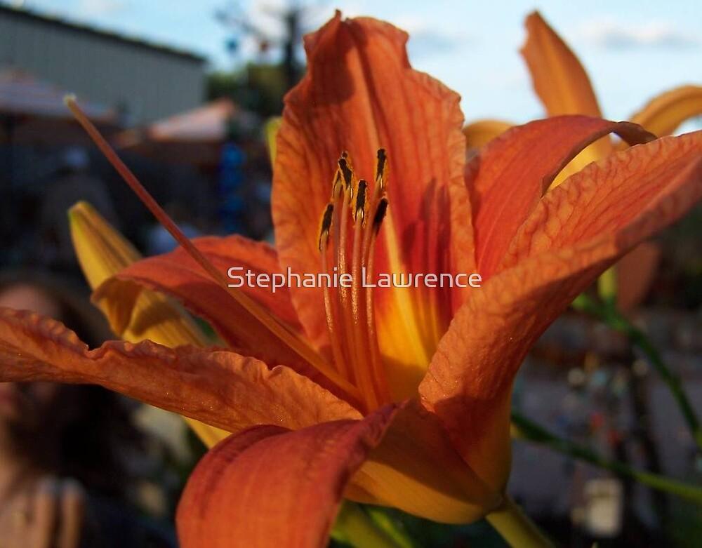 Orange Lily by Stephanie Lawrence