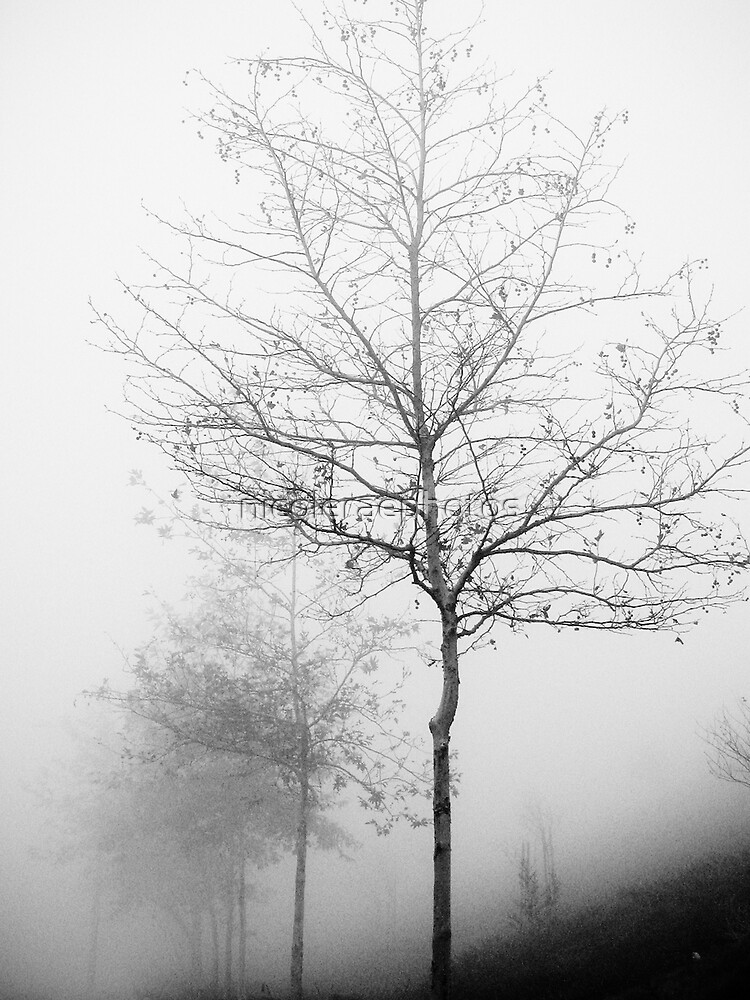 Morning Fog by nicoleraephotos