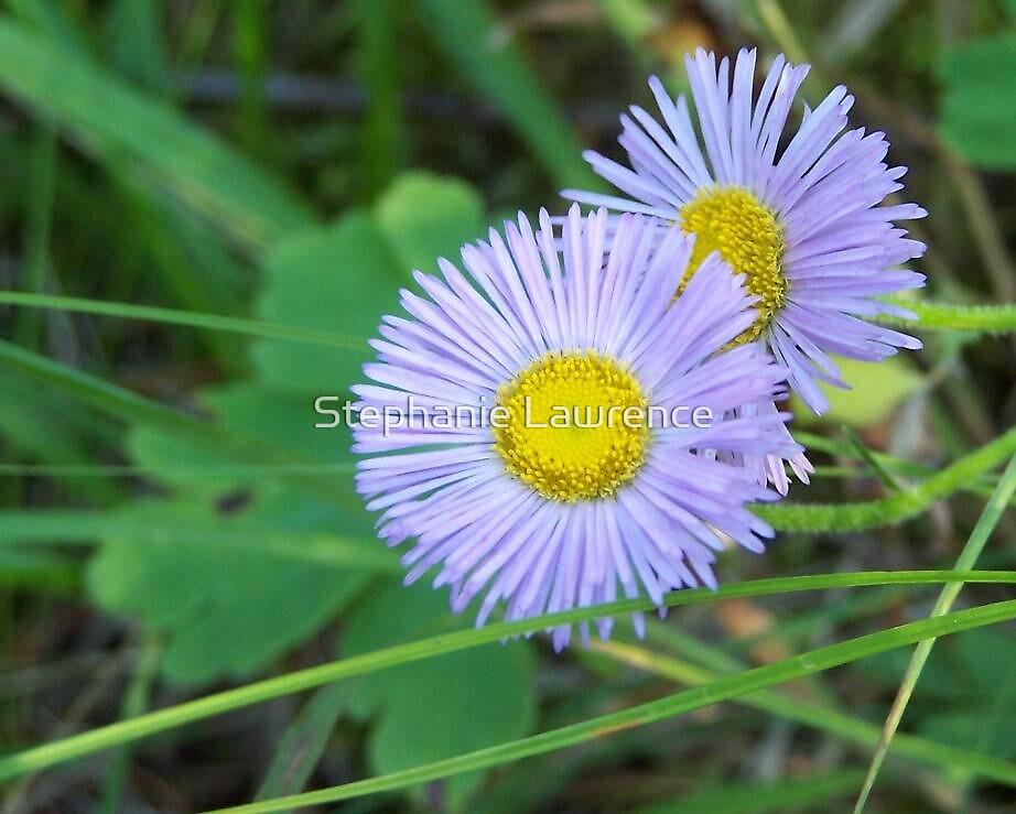 Random Flowers Two by Stephanie Lawrence