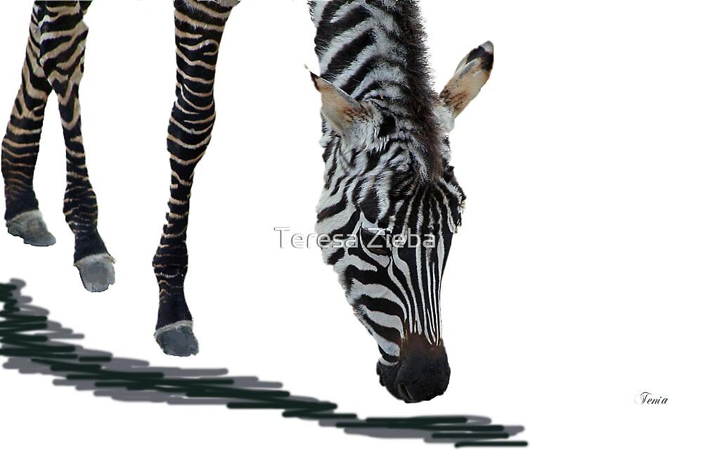 Zebra by Teresa Zieba