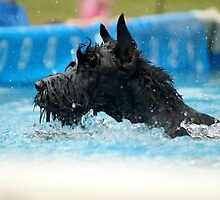 Dock Diving • Giant Schnauzer by 2woofs-1meow