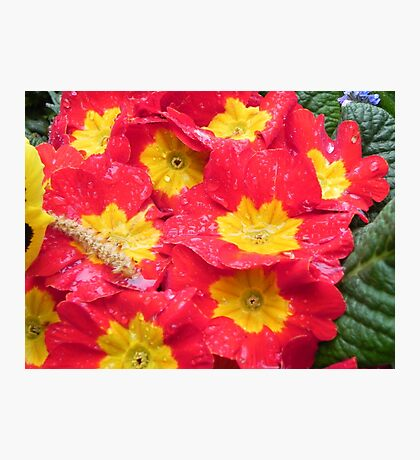 Yellow & Red flowers Photographic Print