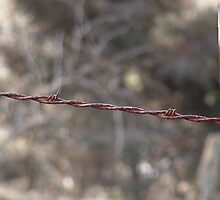 barbed wire by candis