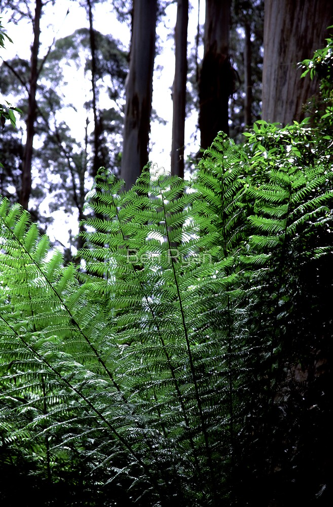 Fern Fronds by Ben Ryan