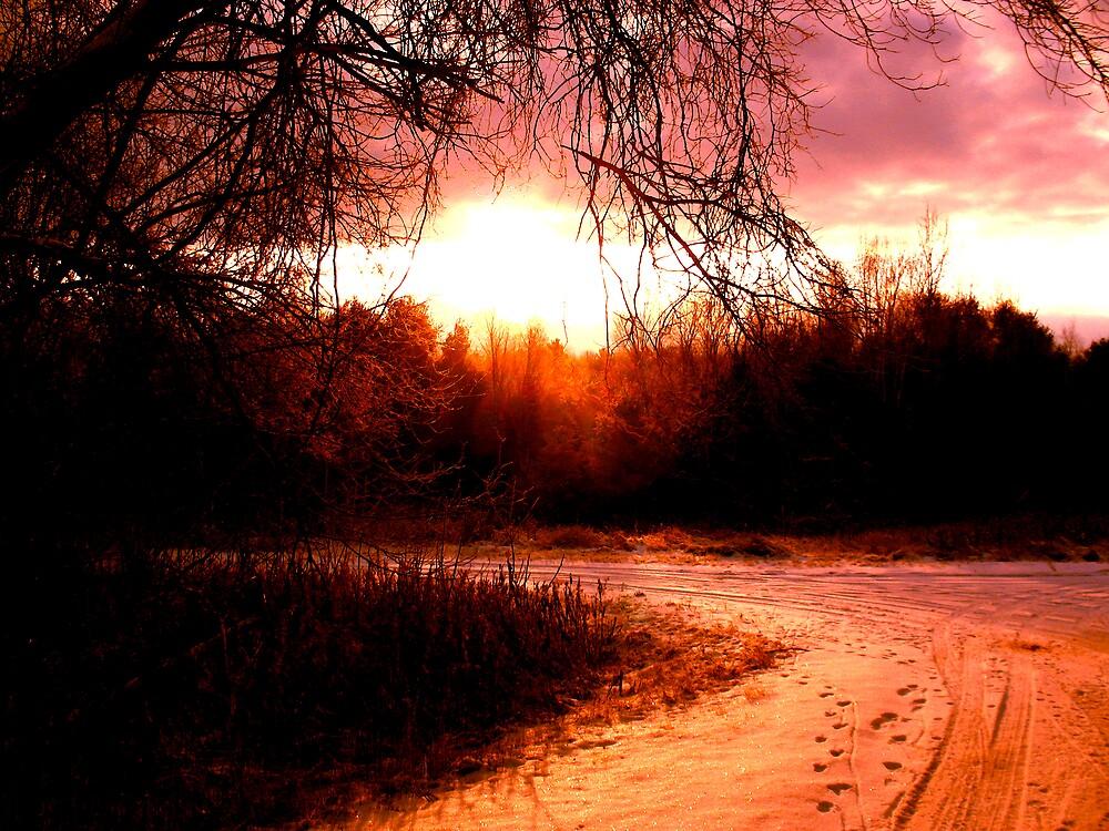 Sunlit Winter Road by nikspix