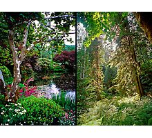 VANCOUVER ISLAND DIPTYCH Photographic Print