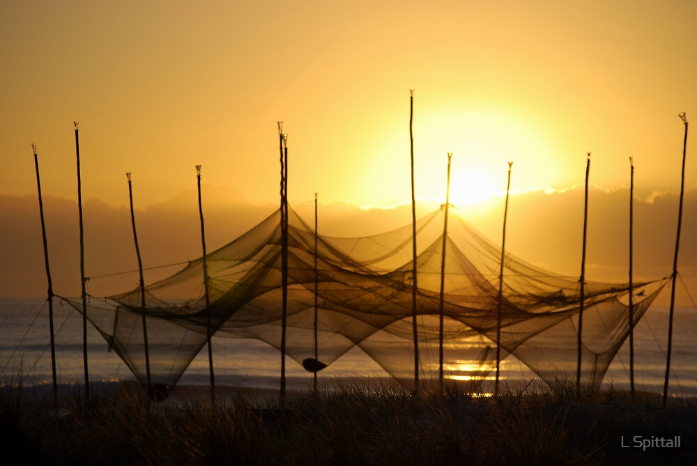 Currumbin nets by L Spittall