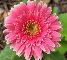 Pretty in Pink by garain