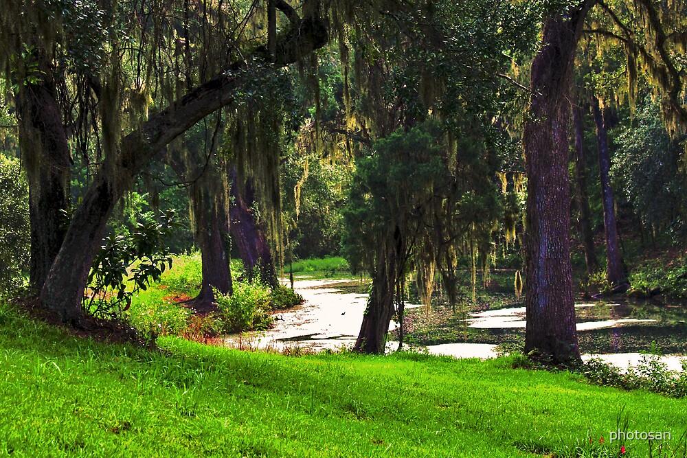 Oak Lagoon by photosan