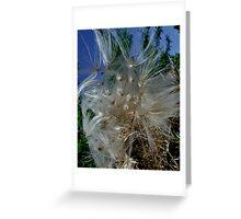 Thistle Flower Greeting Card