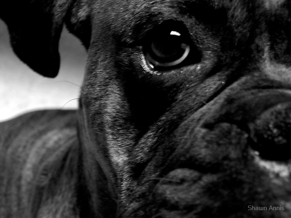 Dog's Eye by Shawn Annis