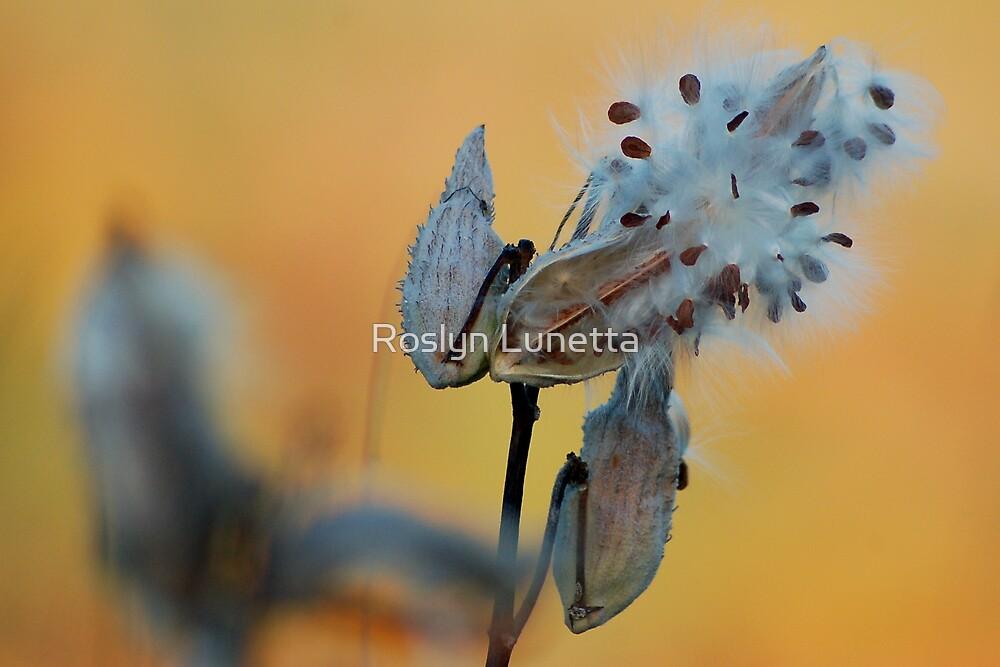Fall Milkweed by Roslyn Lunetta