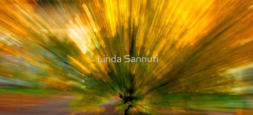 color explosion by Linda Sannuti