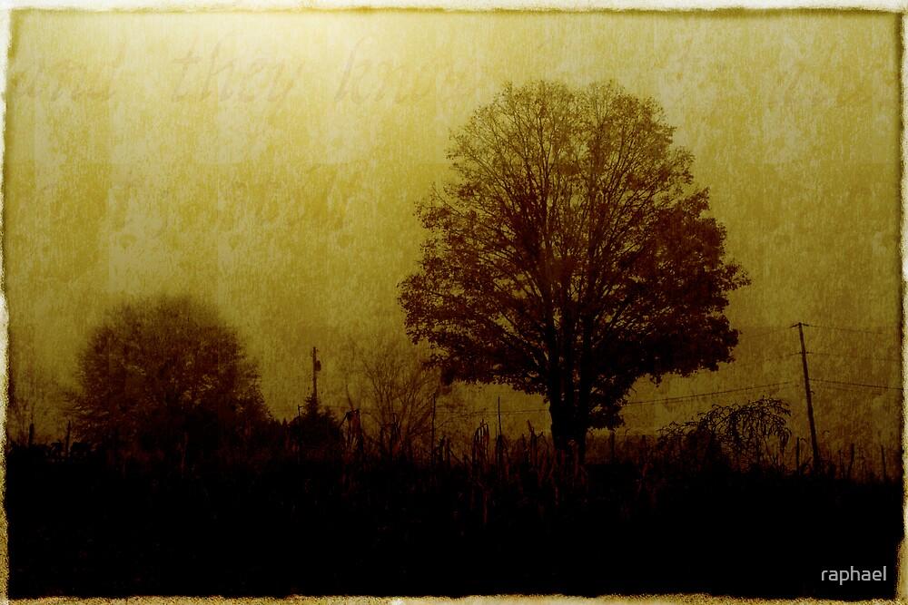 The Misty  Field by Raphael Lopez