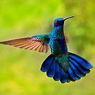 Hummingbird Splendour by Al Bourassa