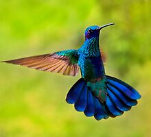 Hummingbird Splendour by Al Bourassa