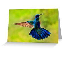 Hummingbird Splendour Greeting Card