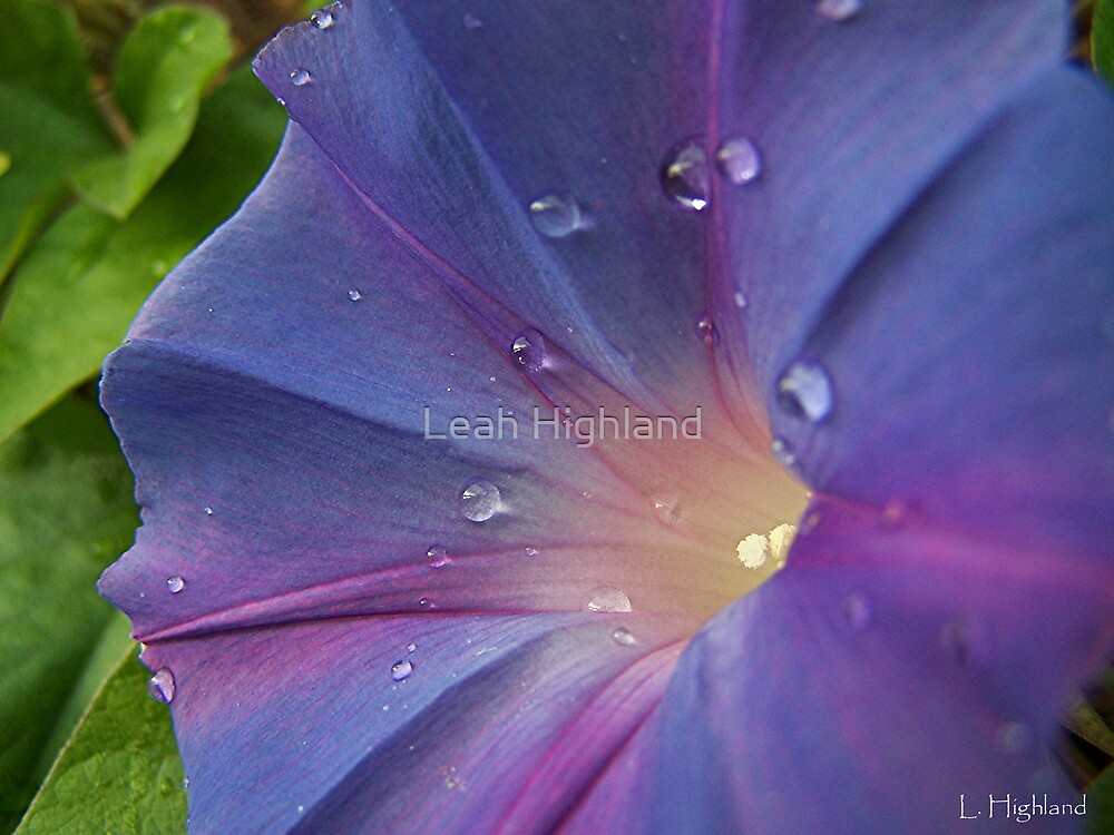Morning Miss Glory by Leah Highland