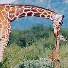giraffe love- by nicolette