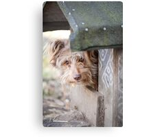 bad dog head jut out of kennel  Canvas Print