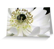 White Anemone Macro Greeting Card