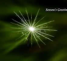 Nature's Star Christmas Card by Lesley Smitheringale