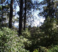peeking through the bush towards Erriba, Tasmania - (climbing Mt Roland) by gaylene