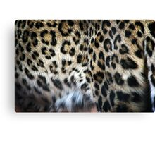 Hide  Canvas Print