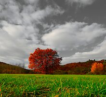 The red bowl by Philippe Sainte-Laudy