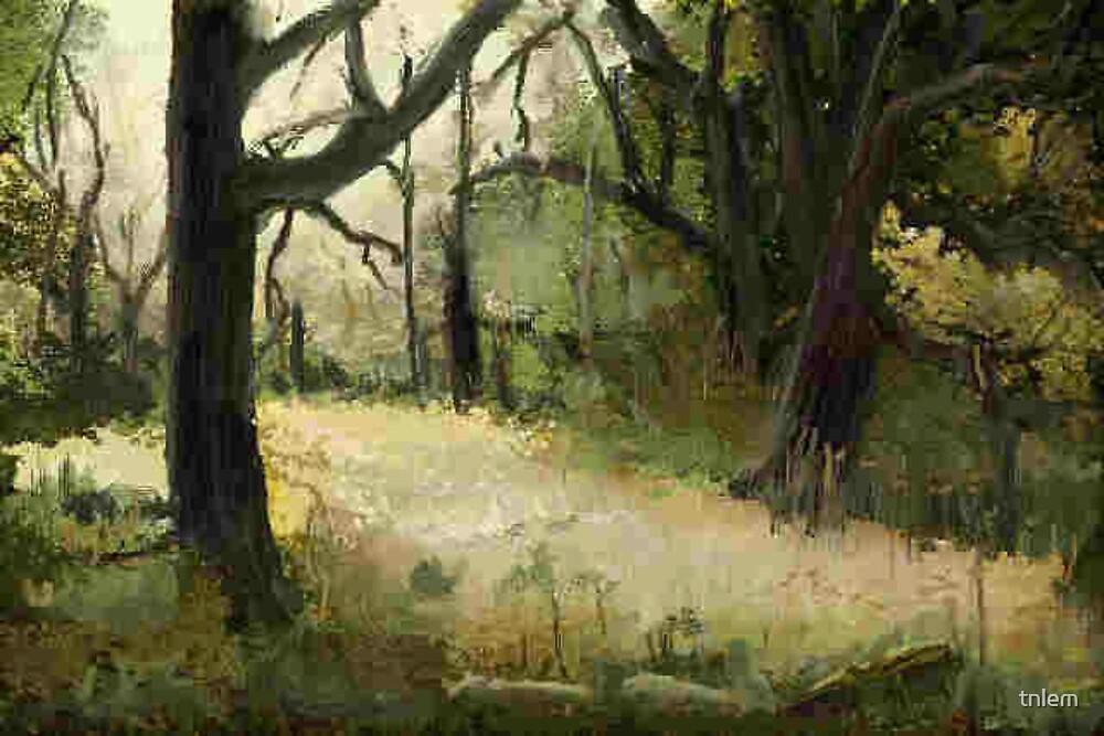 light in the field by tnlem