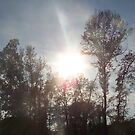 sun and trees by randi1972