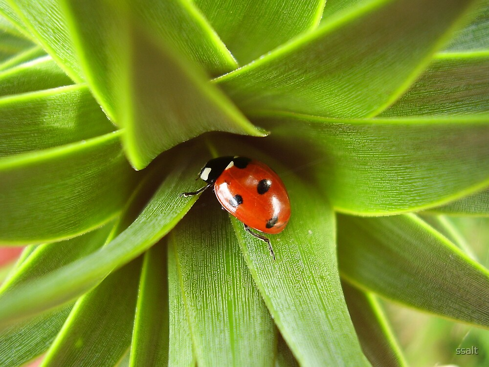 Ladybird in Monkeypuzzle  by ssalt