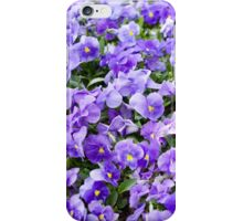 pansy flowers blooming  iPhone Case/Skin