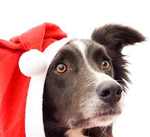 Christmas Collie! by Kate MacRae