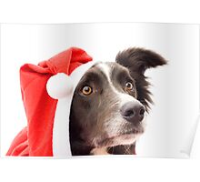 Christmas Collie! Poster