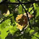 Autumn Beginnings by SWEEPER
