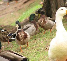 The Duck Pond by Brooke-Lynn Estrada