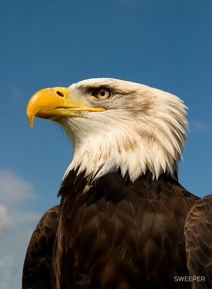Arrogant Eagle by SWEEPER