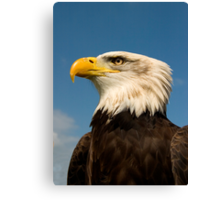 Arrogant Eagle Canvas Print