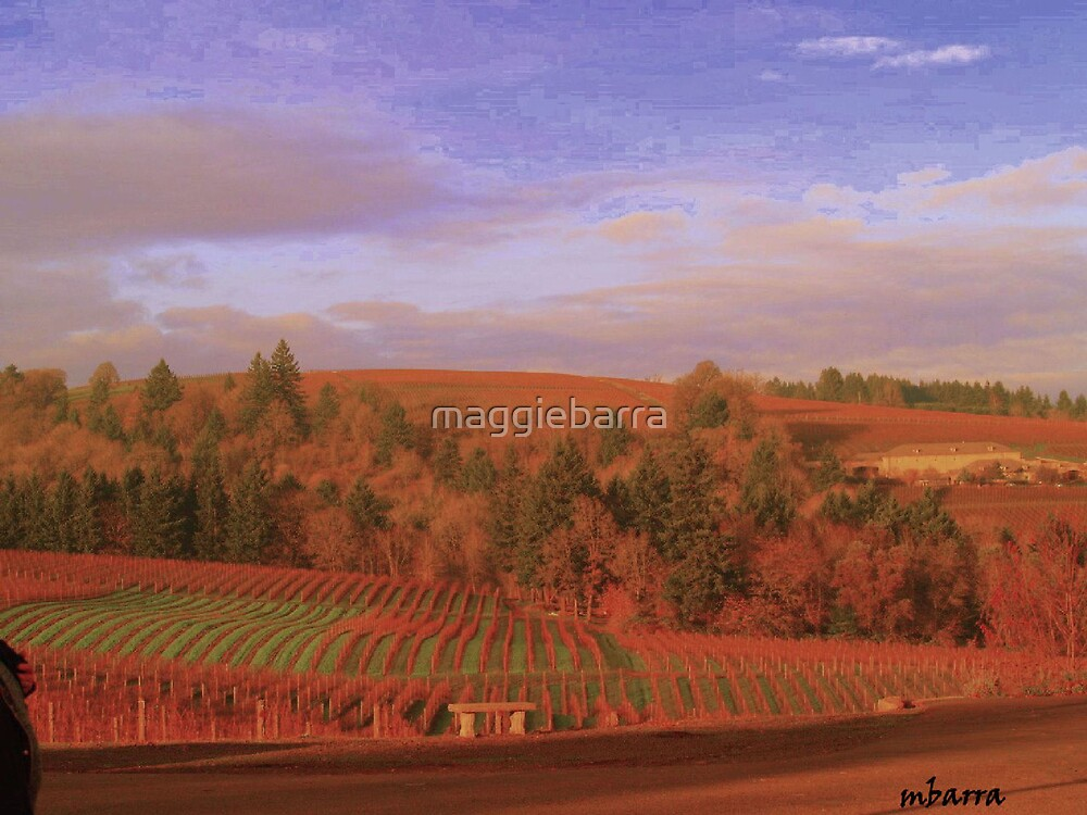vineyard Splendor by maggiebarra