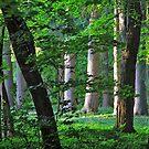 Green Twilight by moorefaith