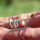 Ladybird by ReelSorcery