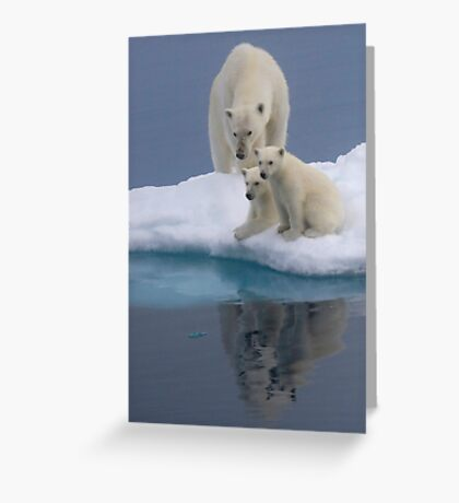 Polar Reflections Greeting Card